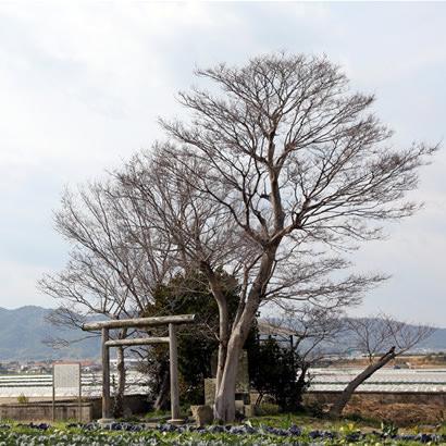 国生み神話伝承地・葦原国